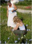 Preparing Chicory Bach Remedy in Greece
